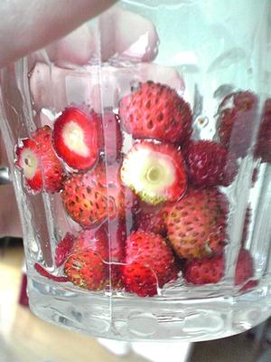 四季なりイチゴ