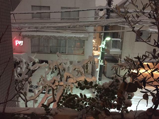 雪のシマトネリコ