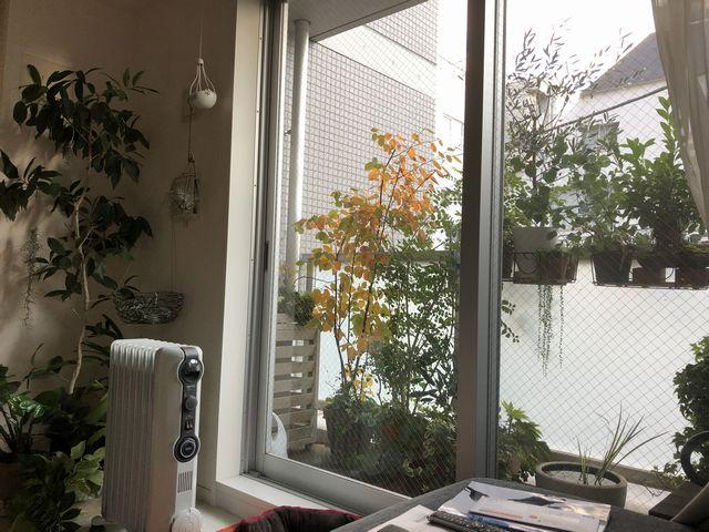 ジューンベリー紅葉