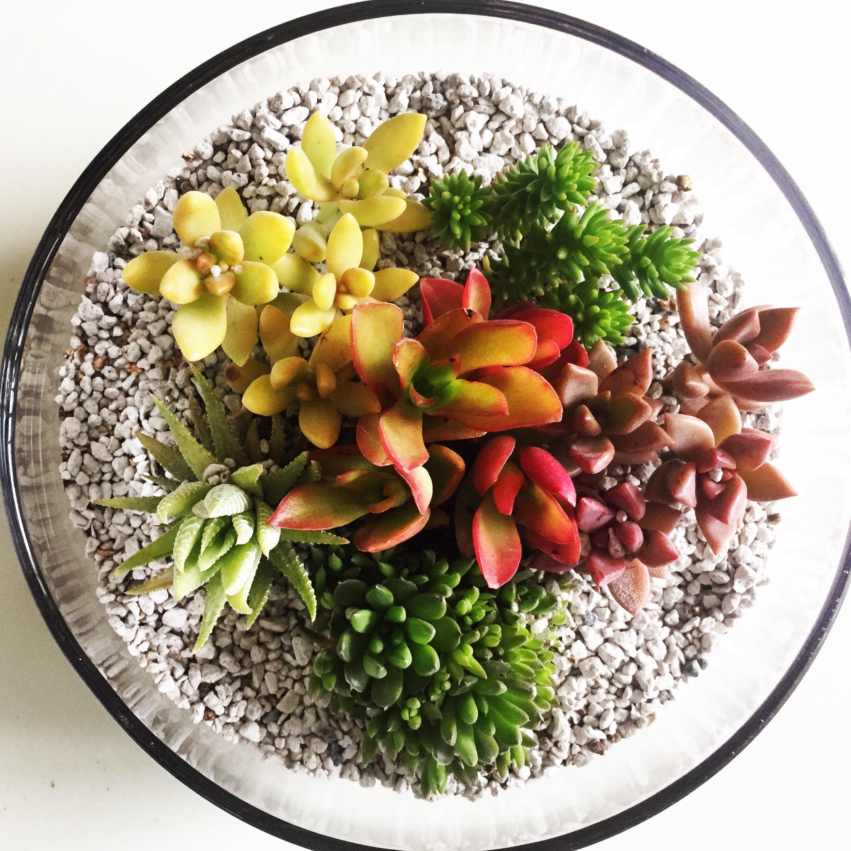 多肉植物のテラリウム