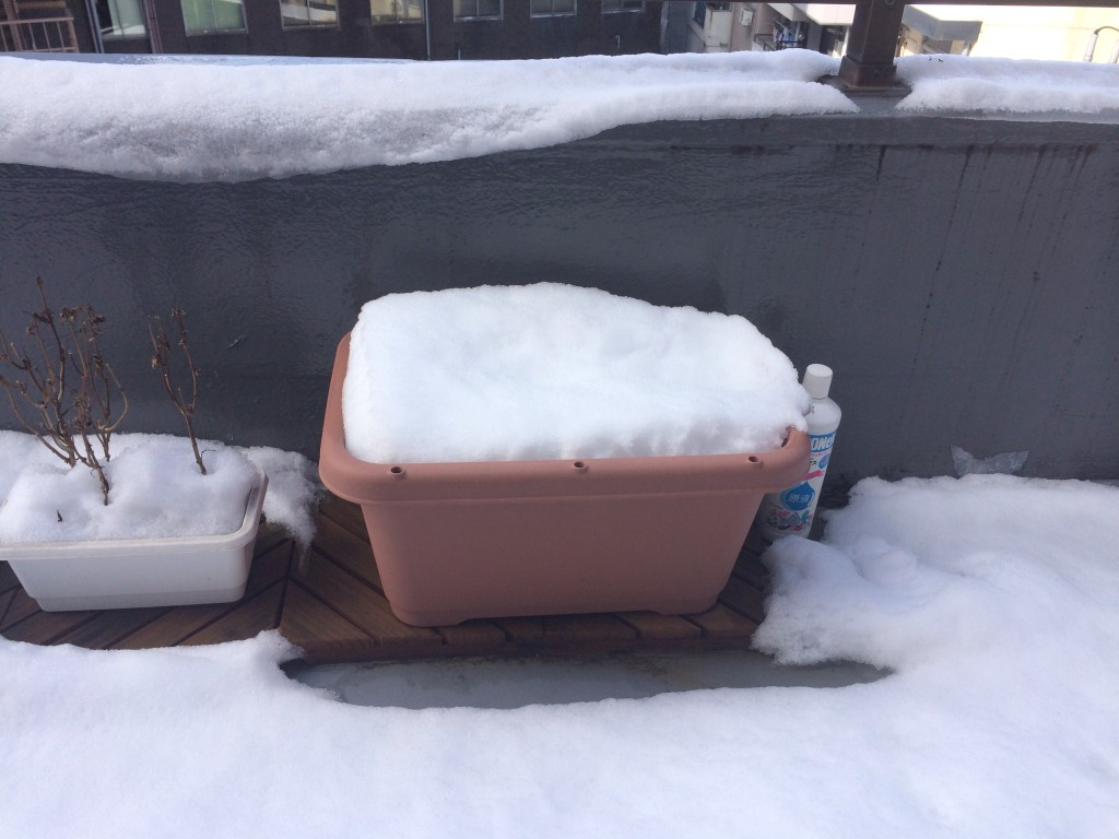椎の実にかぶった雪
