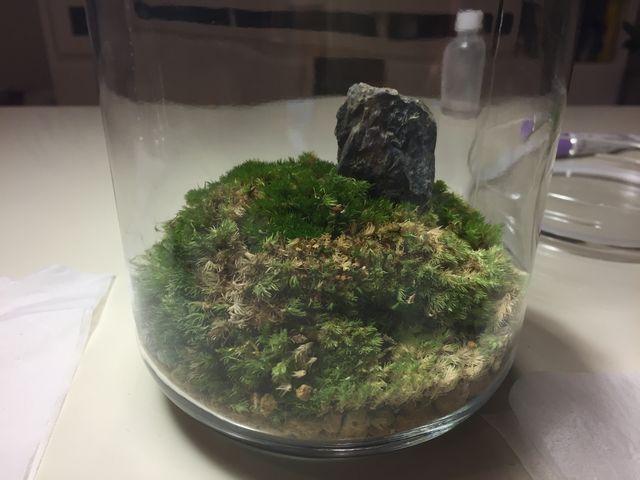 テラリウム石
